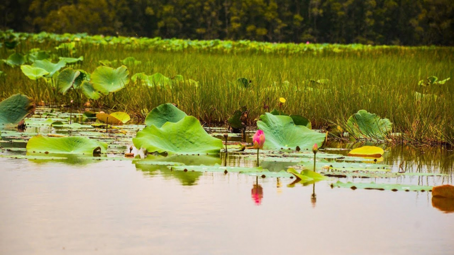 Especially in the lotus season, you will admire a picture of a romantic western countryside with brilliant lotus flowers on the canals.